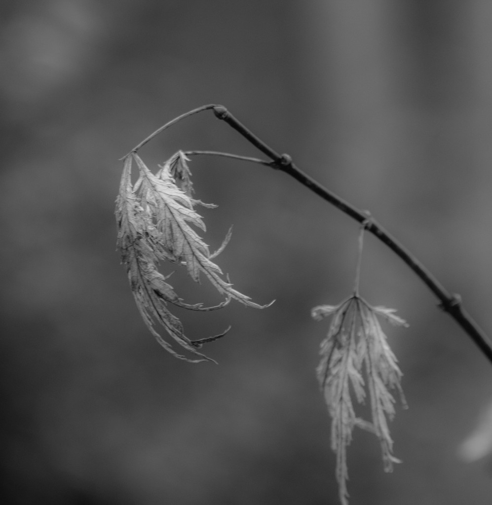 Blowing in the wind? by tara11