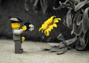 4th Feb 2020 - (Day 356) - Yellow Fellows