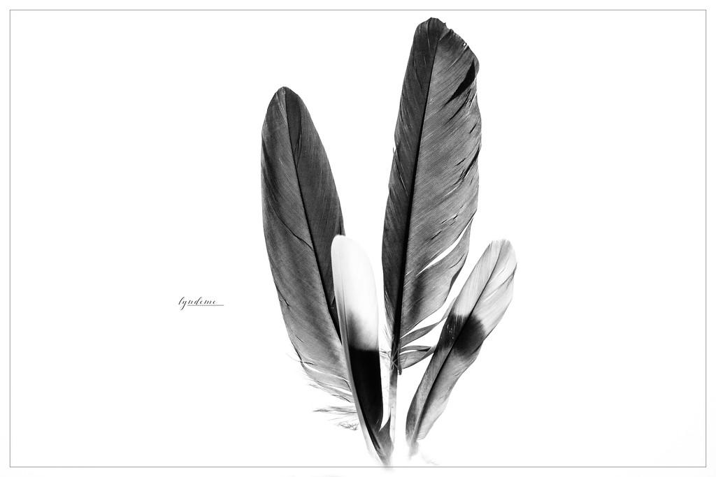 Feather Sampler by lyndemc