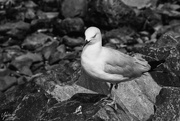 5th Feb 2020 - Seagull