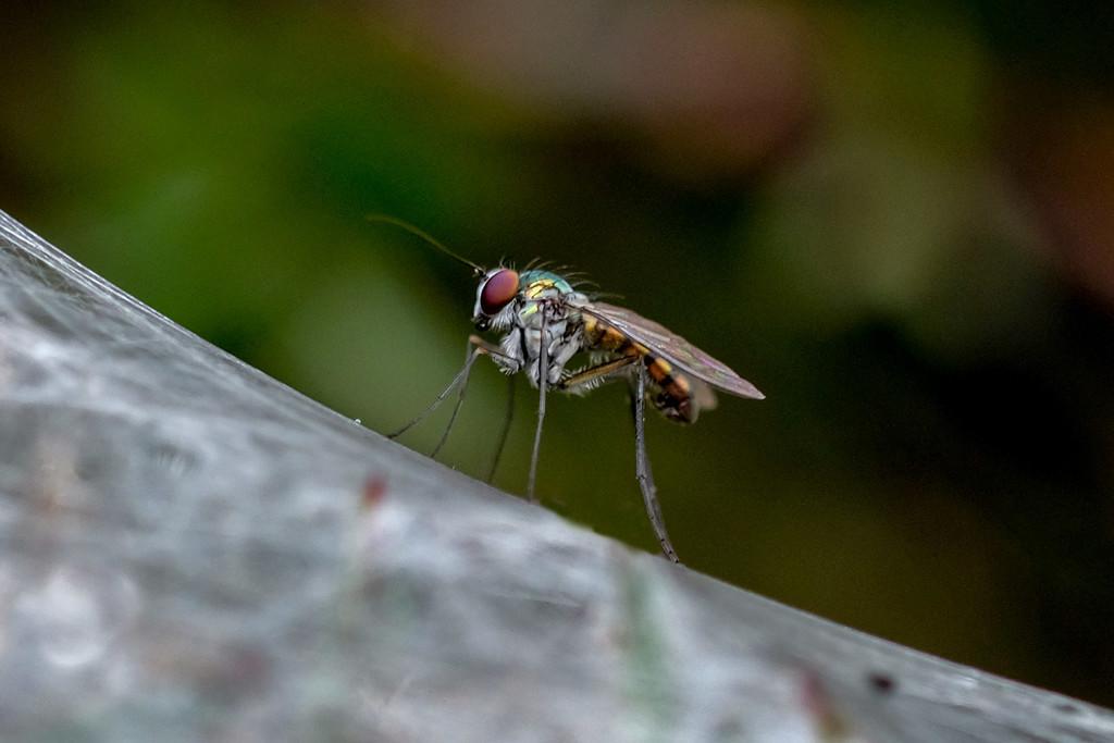 Tiny fly by maureenpp