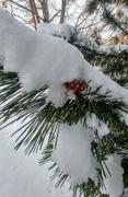 4th Feb 2020 - Snowy Day!