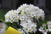 3rd Feb 2020 - Tiny Flowers