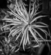 5th Feb 2020 - Succulents.......