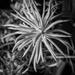 Succulents.......