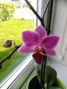 5th Feb 2020 - Orchid