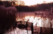 5th Feb 2020 - Reed beds