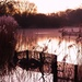 Reed beds by moonbi