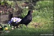 5th Feb 2020 - Nice of Bobbie to pose by the polyanthus