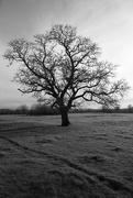 5th Feb 2020 - Carole's Tree