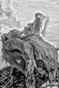 5th Feb 2020 - This Was Some Tree Stump!