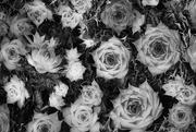 4th Feb 2020 - Forms in Nature: Semper Vivum - Air Plants
