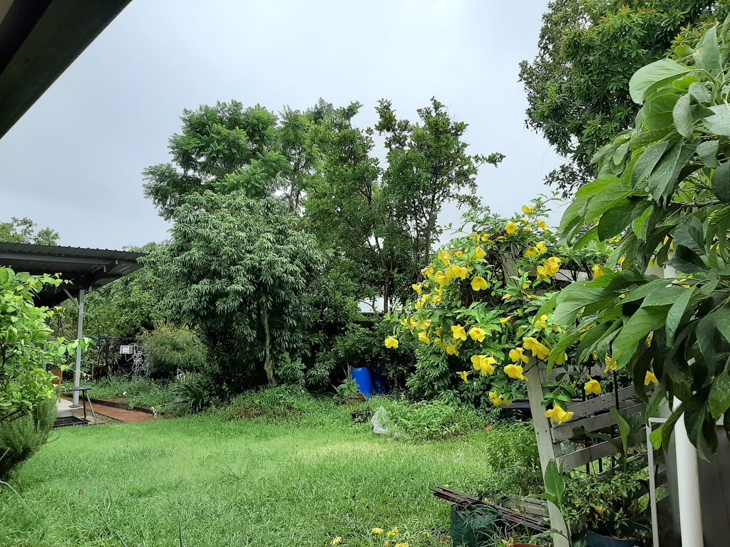 Damp Days Ahead by mozette