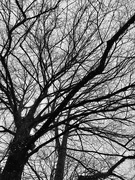 6th Feb 2020 - Under the tree