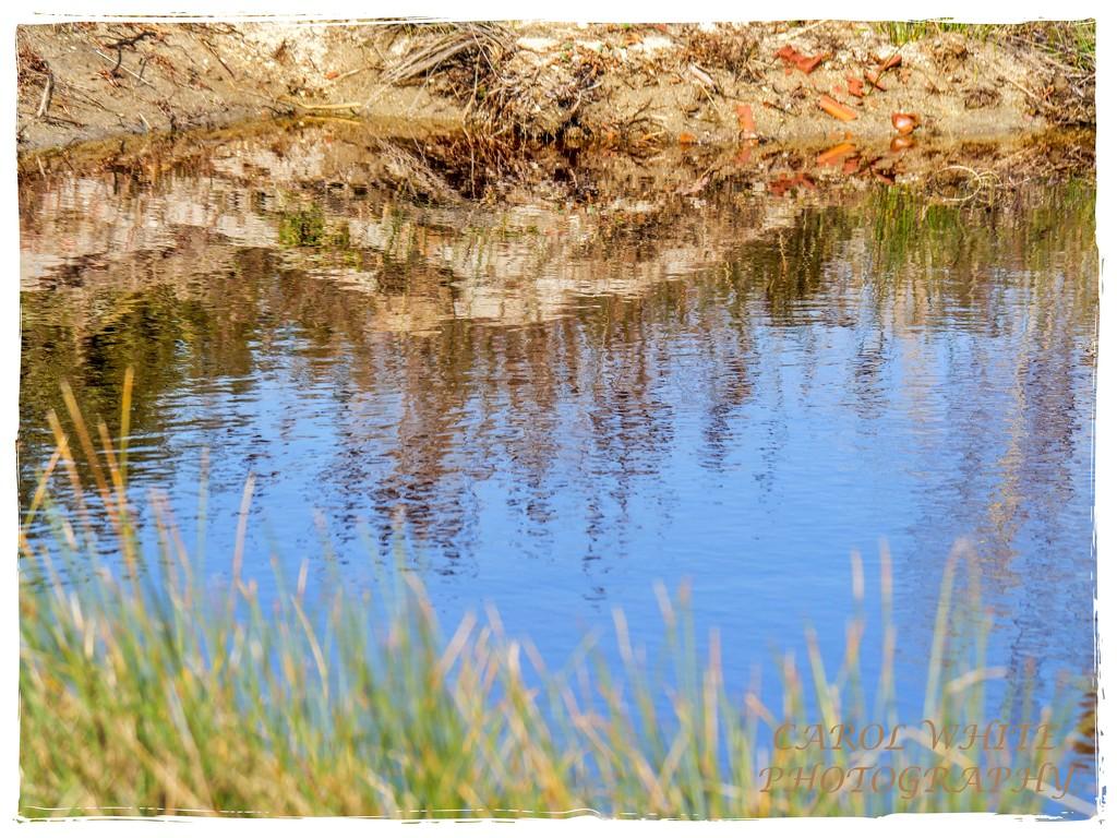 Grassy Reflections by carolmw
