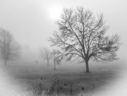 6th Feb 2020 - Misty mornings......