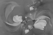 6th Feb 2020 - Flowers ......
