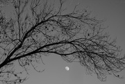 6th Feb 2020 - Branches and Moon