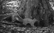 6th Feb 2020 - Squirrel carrying a nut