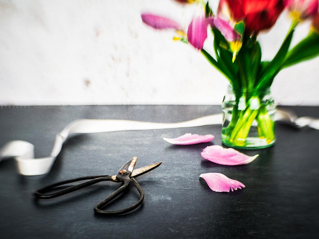 ribbon by pistache