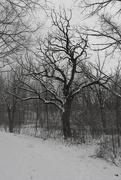 6th Feb 2020 - snowtree