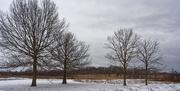 6th Feb 2020 - snowscape road closed