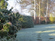 6th Feb 2020 - A cold and frosty morning...