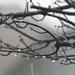 Rainy Thursday