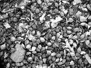 6th Feb 2020 - beech nuts, etc