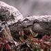 An Ozark Snow