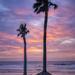 Palmetto Tree Sunrise by kvphoto