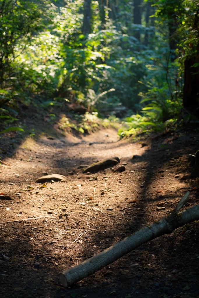along the path by teriyakih