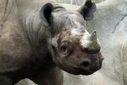18th Jan 2020 - Rhino Close Up