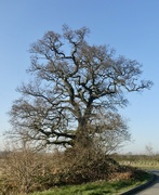 6th Feb 2020 - Striking tree