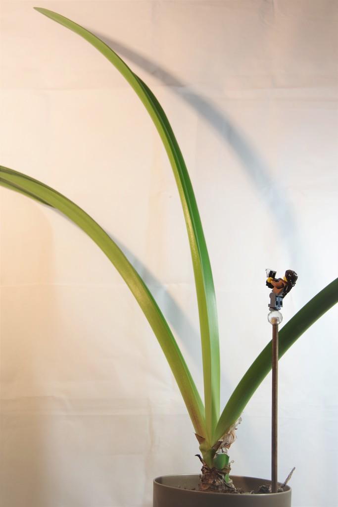 Leafy Amaryllis by 30pics4jackiesdiamond