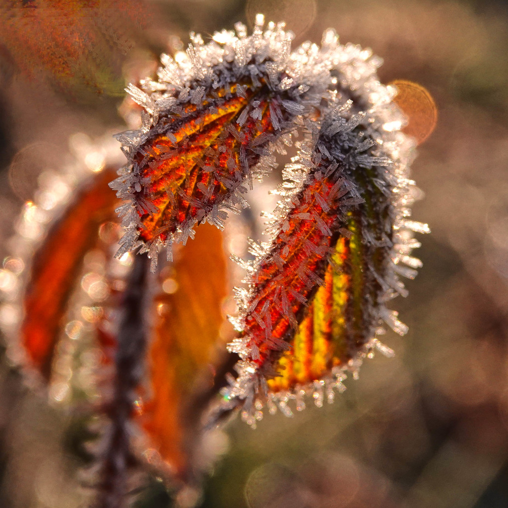 And Still More Frost by milaniet