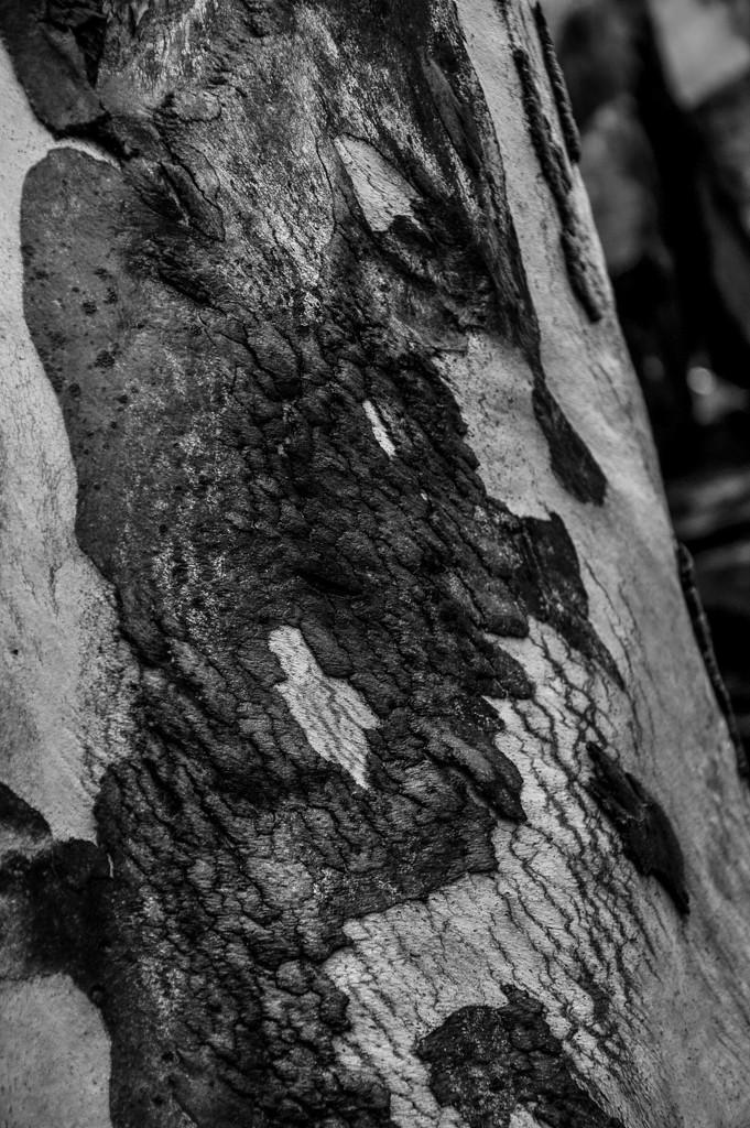 Eucalyptus by overalvandaan