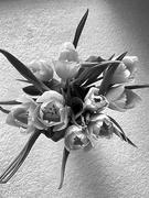 7th Feb 2020 - My Tulips