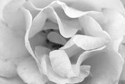 1st Feb 2020 - bloom