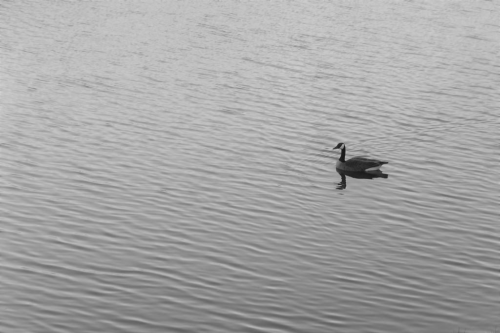 Serenity by linnypinny