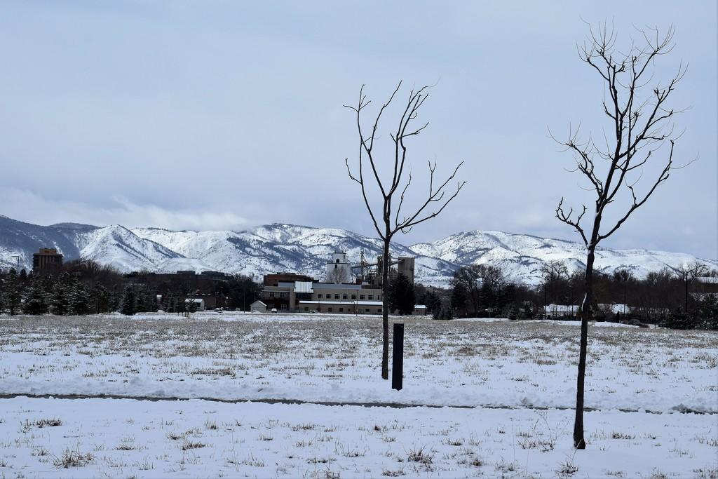 Fresh snow by sandlily