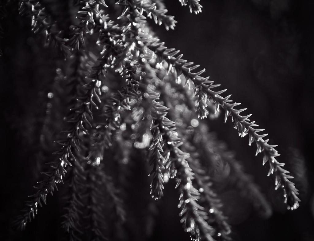 Sparkling textures by kiwinanna