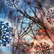 8th Feb 2020 - The Light of Winter