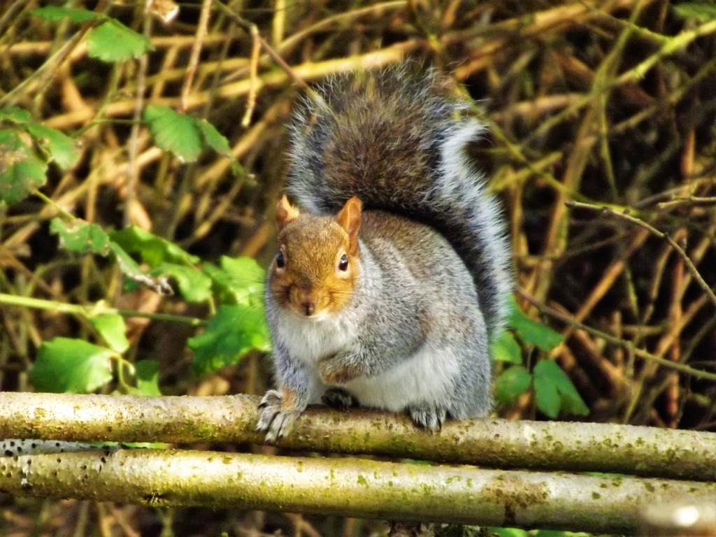 Squirrelling away by ajisaac