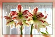 8th Feb 2020 - Now in full bloom