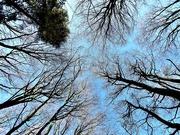 14th Jan 2020 - Sea of Trees Part #2