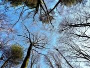 17th Jan 2020 - Sea of Trees Part #3