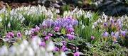 8th Feb 2020 - Spring Colour