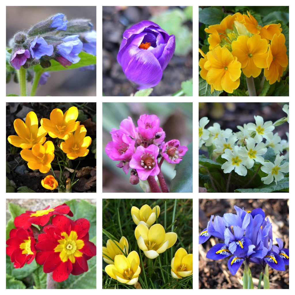 Spring Flowers in the Garden by susiemc