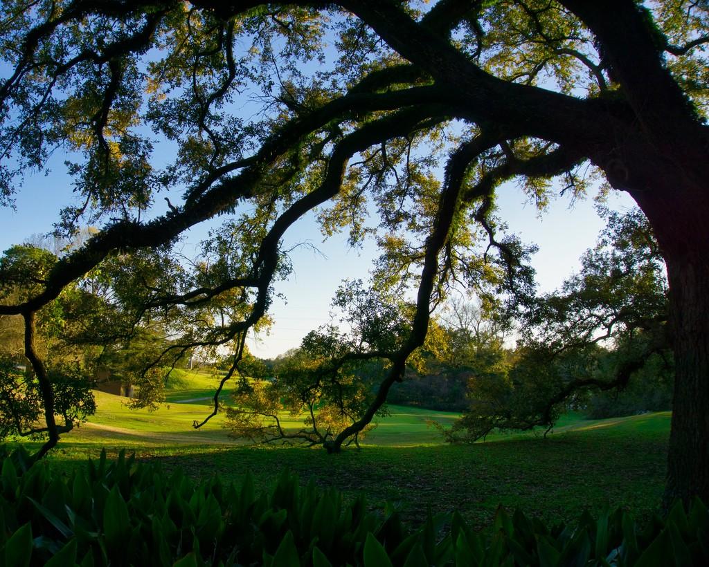 City Park golf course by eudora